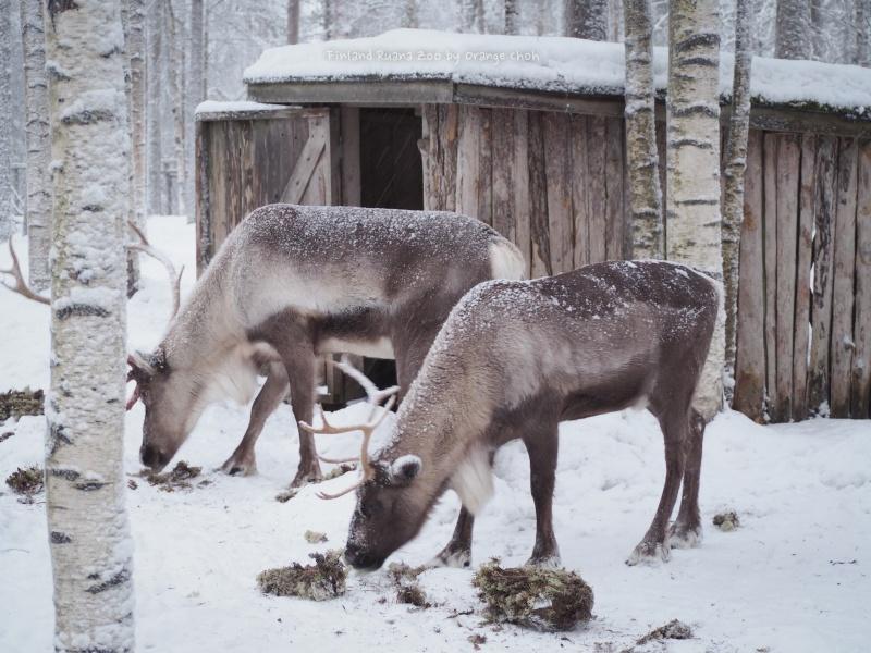 Ranua Wildlife Park @ Finland