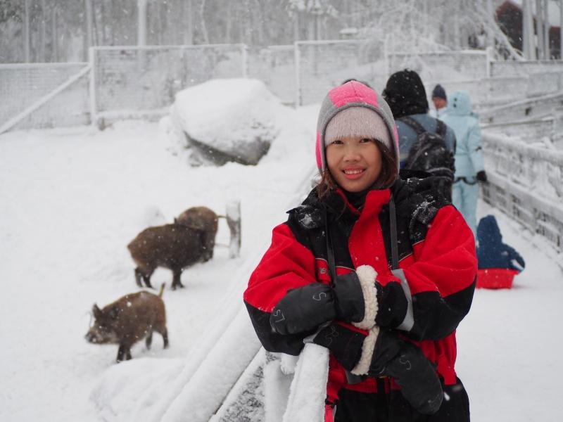 Wild life zoo, Rovaniemi, Finland