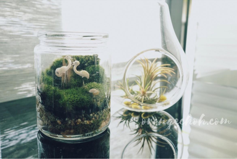How to Plant Your Terrariums, terrariums,soil,rock, moss, office table plants, plants in bottle, plants, plant, terrarium plants, how to make moss terrariums, office table plant, table plant, indoor plant, plant, moss.