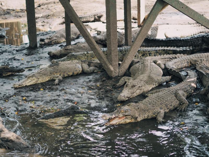 Miri Crocodile Farm & mini zoo, zoo,miri zoo, crocodile farm, malaysia, miri sarawak