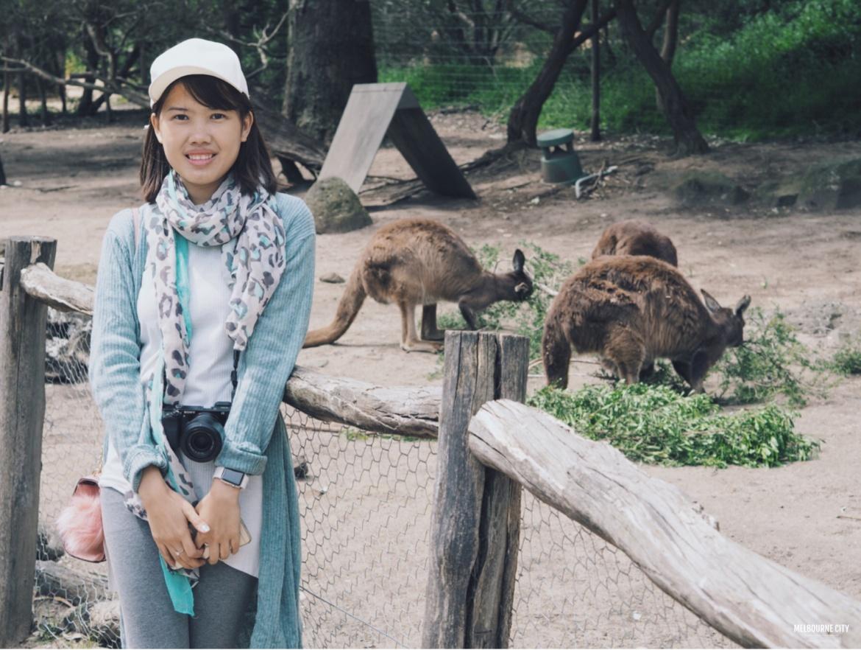 Travel melbourne, melbourne travel, Australia, Melbourne, Melbourne City,travel,traveling, melbourne city day trip, Orange Choh, Australia, Melbourne zoo, zoo, Australia zoo